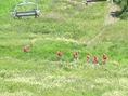 Gruppering i samfälld tropp nedför berget