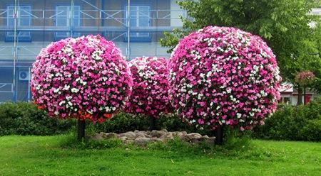 Flower Power i Katrineholm - Men vad är det för träd?