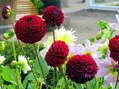 Blomsterprakt i Trädgårdsföreningen