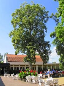 Här kan man fika i sol, skugga eller allara bäst - under ett stort träd.