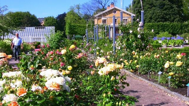 göteborg trädgårdsföreningen