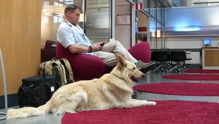 Även hunden är välkommen i SJs lounger