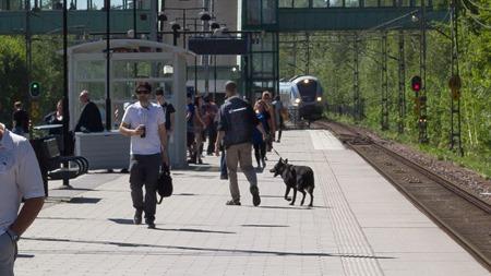 Den här rejält ilskna hunden som inte ens gillade sin husse skulle som tur var åka söderut
