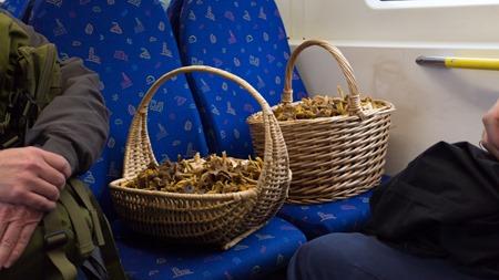 Skogens guld får egna sittplatser
