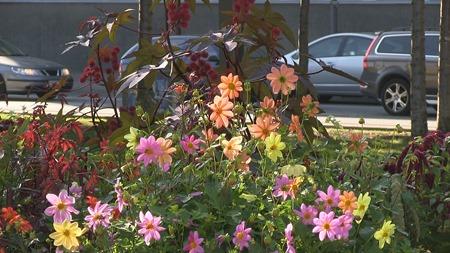Blommor i mängd