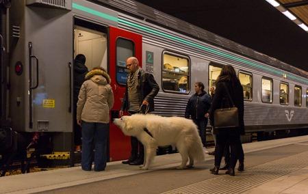 Är isbjörnar tillåtna på SJs tåg?